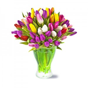50 Colorful Tulips