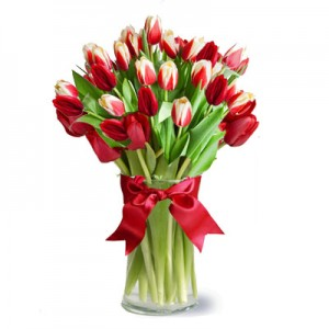 25 Red-white Tulips